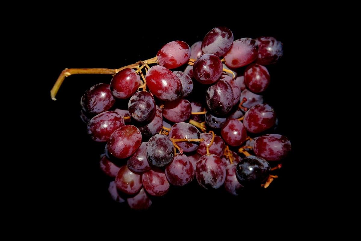 Winnice na Podkarpaciu